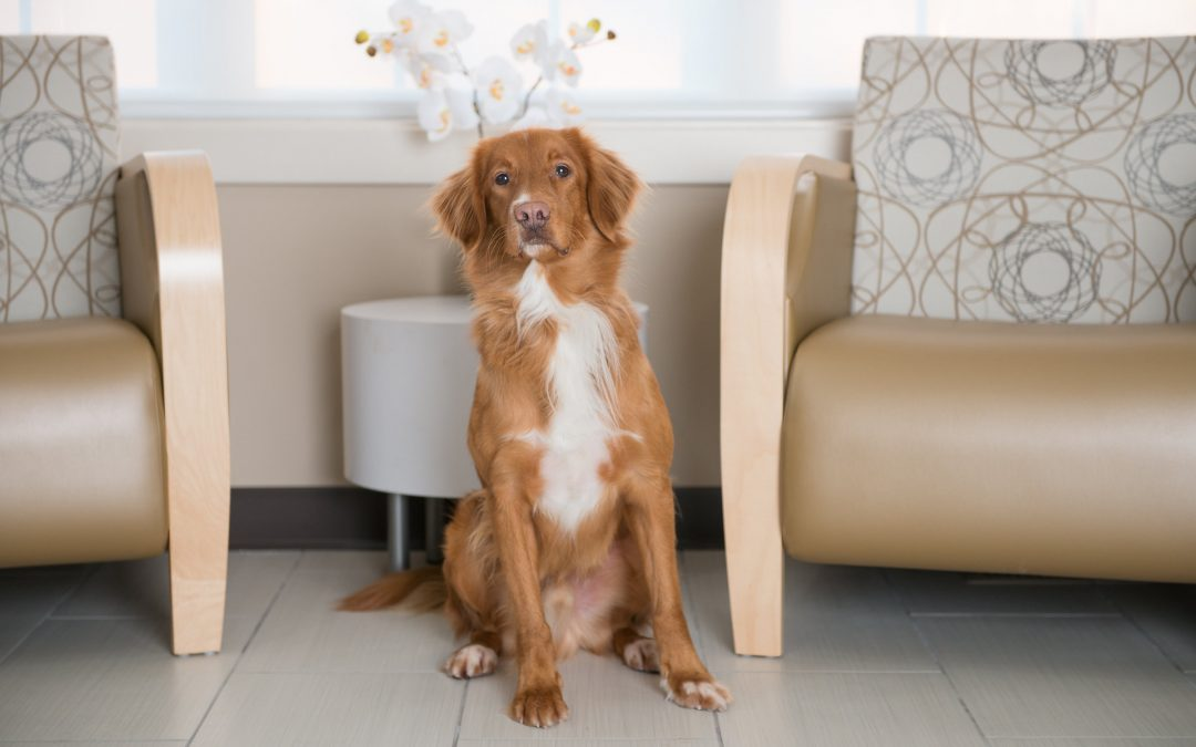Loki, the therapy dog