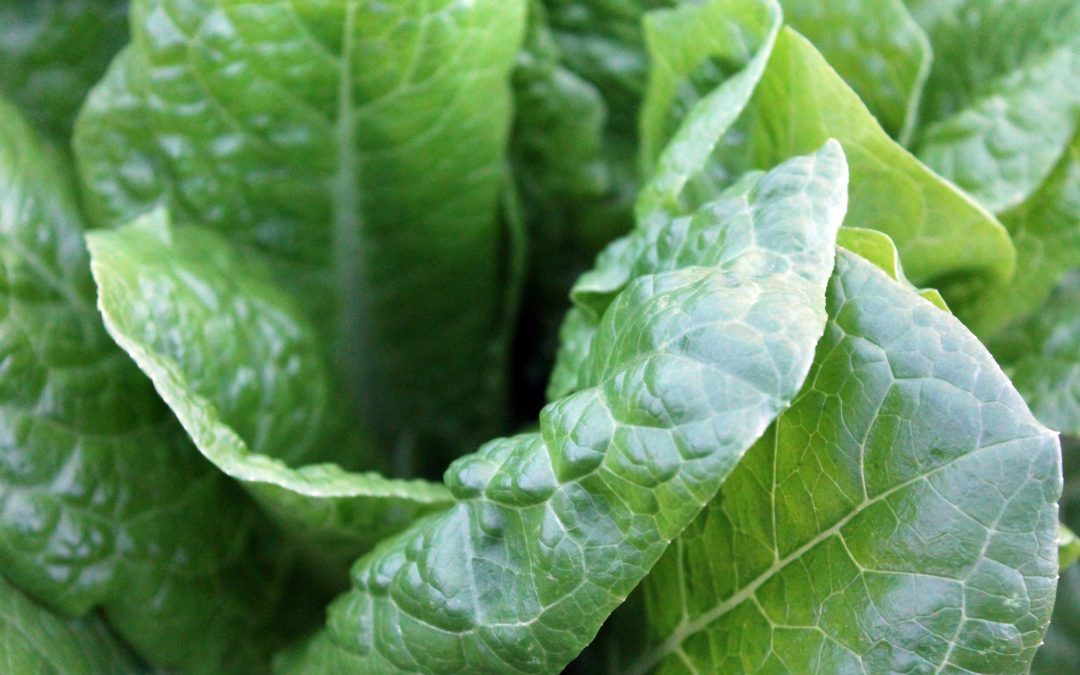 Is My Low Energy Because of a B12 or Iron Deficiency?